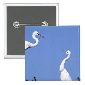 Two Great Egrets (Ardea alba) in a courtship 15 Cm Square Badge