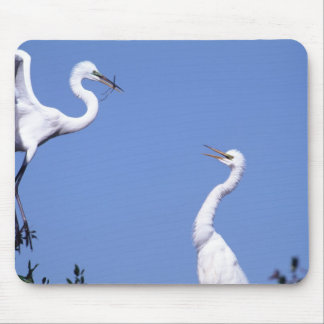 Two Great Egrets (Ardea alba) in a courtship Mouse Pad