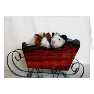 Two Guinea Pigs in a Sleigh, Christmas Card