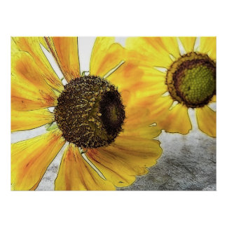 Two Happy-Faced Helenium Flowers Posters