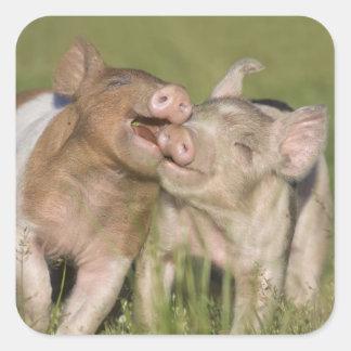 Two Happy Piglets Square Sticker