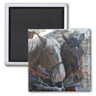 Two horses. Blonde and brunette. Magnet