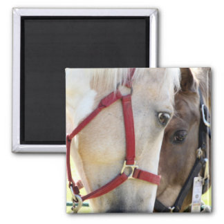 Two Horses Magnet