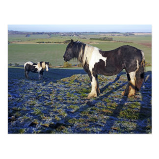 Two horses on Hackpen hill in North Wiltshire Postcard