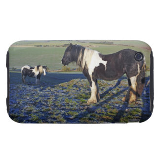 Two horses on Hackpen hill in North Wiltshire Tough iPhone 3 Cover