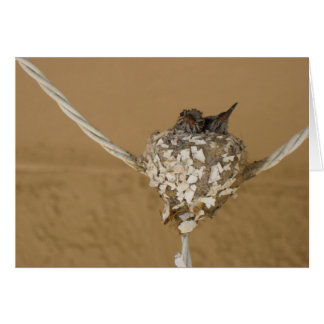 Two Hummingbirds in a Nest Card