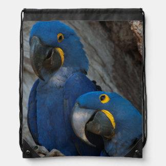 Two Hyacinth Macaws, Brazil Rucksack