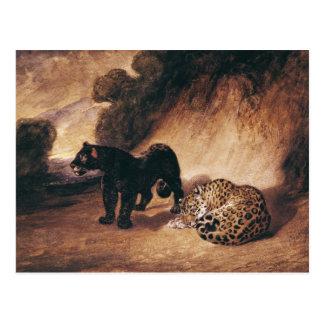 Two Jaguars from Peru Postcard