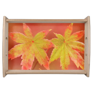 Two Japanese Maple Leaves Serving Tray