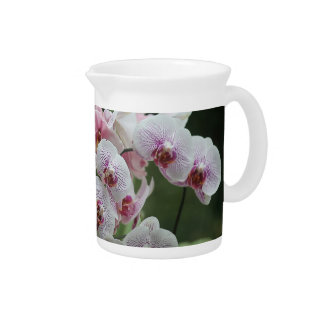 two kinds of orchids pitcher