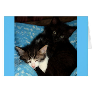 Two Kitten Birthday Card