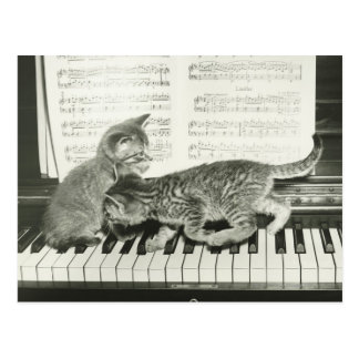 Two kitten playing on piano keyboard, (B&W) Postcard