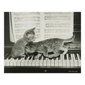 Two kitten playing on piano keyboard poster