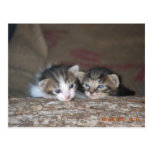 Two kittens on log postcard