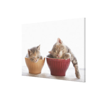Two Kittens Sleeping in Bowls Gallery Wrapped Canvas