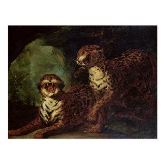 Two Leopards, c. 1820 Postcard