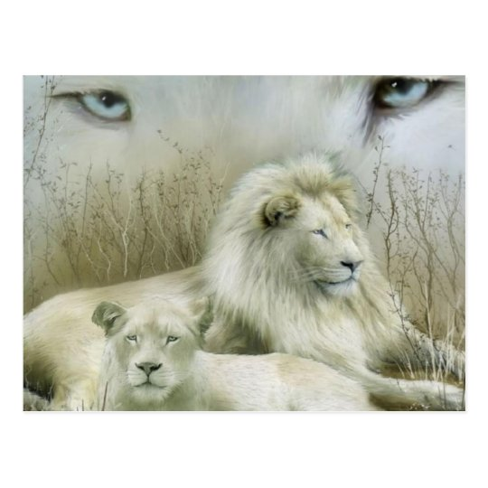 Two lions at rest art design postcard