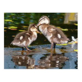 Two Little Duckies Postcard