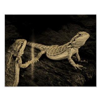 Two Lizards Poster