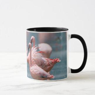 Two Male Lesser Flamingos (Phoenicopterus Minor) Mug