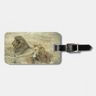 Two Male Lions Luggage Tag
