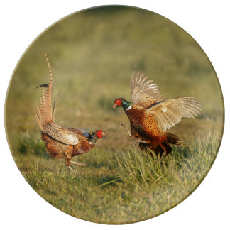 Two male ring-neck pheasants fighting. porcelain plate