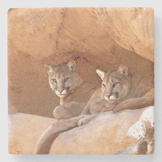 Two mountain lions stone coaster