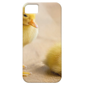 Two newborn yellow ducklings on wooden floor barely there iPhone 5 case