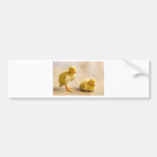 Two newborn yellow ducklings on wooden floor bumper sticker
