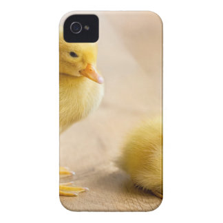 Two newborn yellow ducklings on wooden floor Case-Mate iPhone 4 cases