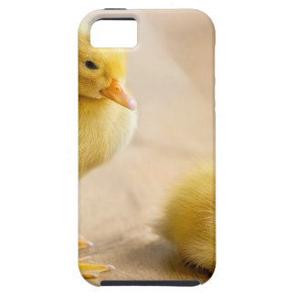 Two newborn yellow ducklings on wooden floor iPhone 5 cover