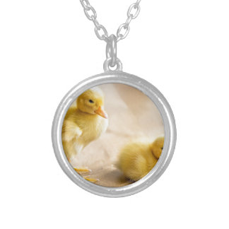 Two newborn yellow ducklings on wooden floor silver plated necklace