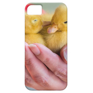 Two newborn yellow ducklings sitting on hand case for the iPhone 5