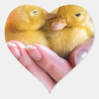 Two newborn yellow ducklings sitting on hand heart sticker
