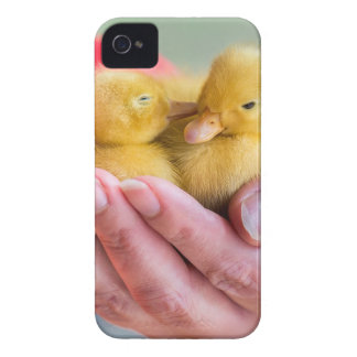 Two newborn yellow ducklings sitting on hand iPhone 4 covers