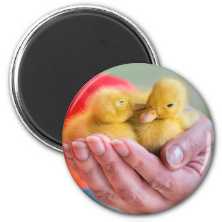Two newborn yellow ducklings sitting on hand magnet