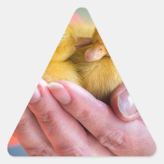 Two newborn yellow ducklings sitting on hand triangle sticker