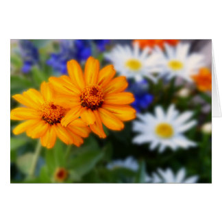 Two Orange Daisies, Blank Inside Card