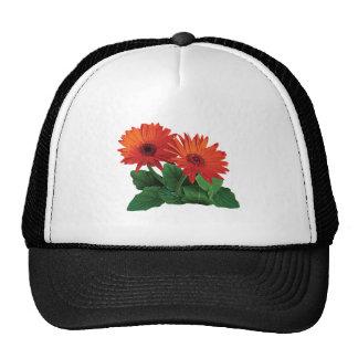 Two Orange Gerbera Daisies Trucker Hat