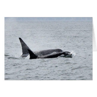 Two Orca Whales Side by Side Card