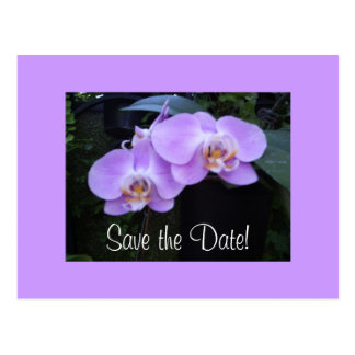 Two Orchids Postcard