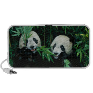 Two pandas eating bamboo together, Wolong, 2 Travel Speakers