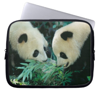 Two pandas eating bamboo together, Wolong, Laptop Computer Sleeves
