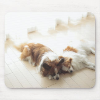 Two Papillion sleeping Mouse Pad