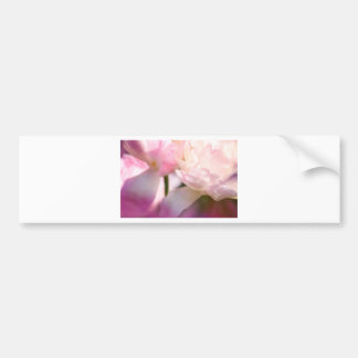 Two Peony Flowering Tulips with Petals Touching Bumper Sticker