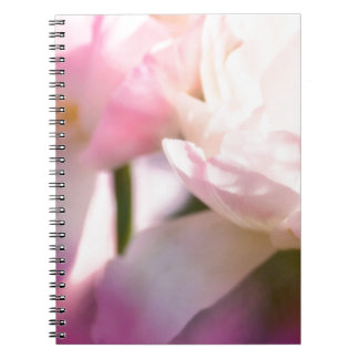 Two Peony Flowering Tulips with Petals Touching Notebooks