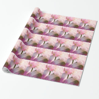 Two Peony Flowering Tulips with Petals Touching Wrapping Paper
