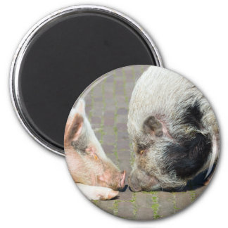 Two pigs making contact 6 cm round magnet