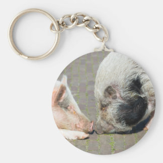 Two pigs making contact basic round button key ring