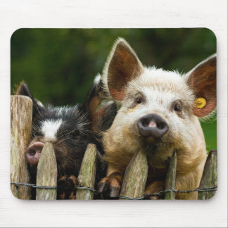 Two pigs - pig farm - pork farms mouse pad
